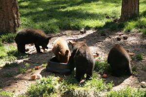 Baby Bears at Breakfast