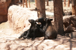 Bearizona's Kindergarten Bears